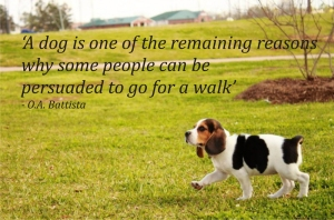 Dog walk quote