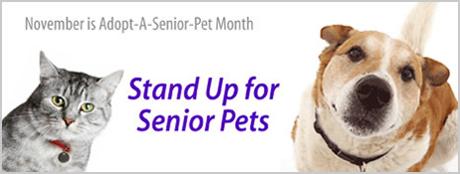 adopt-senior-pet-masthead_460