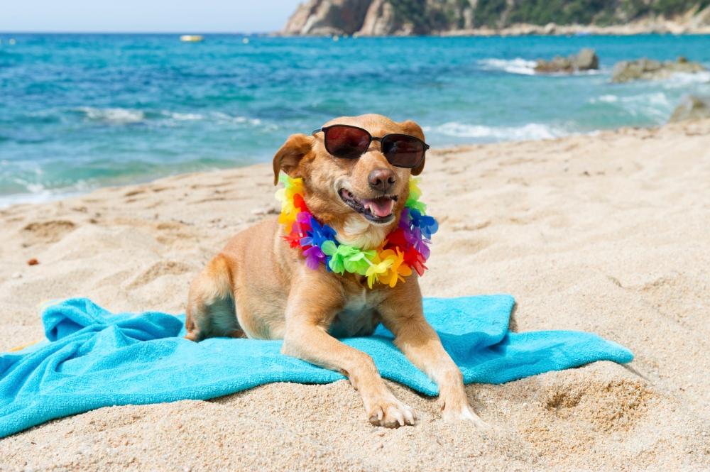 Port-City-Daily-dog-on-beach